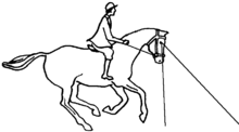 Illustration of horse using binocular vision by his feet