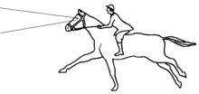 Illustration of horse distance vision