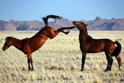 Namib horses