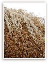 Closeup of North American Curly Horse fur