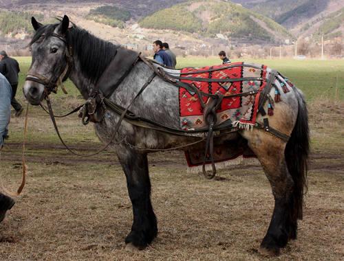 Danubian horse picture