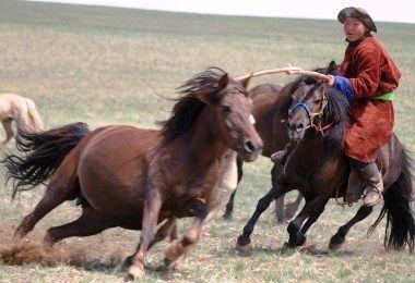 Annual horse roundup at Ewenke Qi