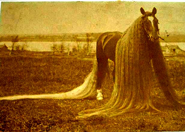 longest horse mane and tail