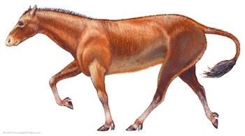Mesohippus, a horse that lived 40 million years ago