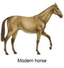 Modern Horse