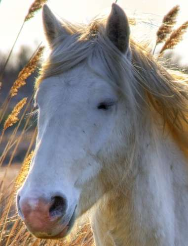 Horse with pig eye