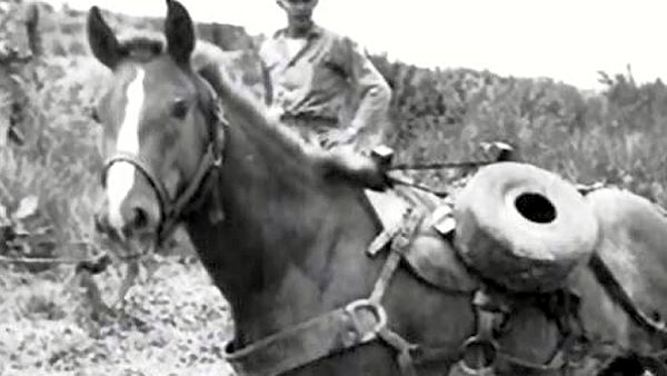 Reckless, Marines war horse
