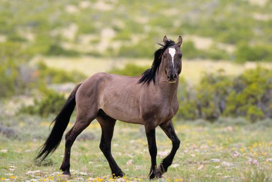 Sulphur Mustang