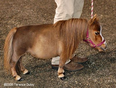 Thumbelina is in the Guiness Book of World Records as the world's smallest living horse.
