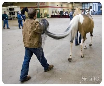 Horse with twelve foot tail